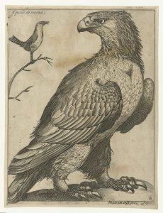 The Rijksmuseum, Amsterdam RP-P-1981-166 - Camilla Läckberg, L'Oiseau de mauvais augure, lu par Eric Herson-Macarel