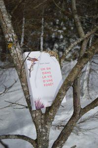Plateau du Lévézou, puech Monseigne - David George Haskell, Un an dans la vie d'une forêt