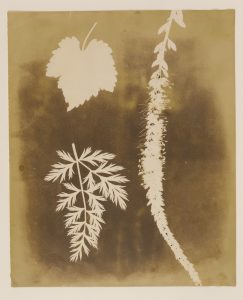 The J. Paul Getty Museum, Los Angeles 84.XM.1002.10 - Claire Keegan, Les trois lumières
