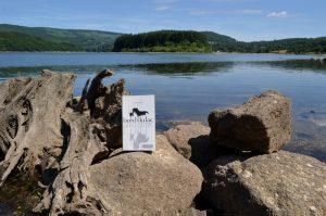 Monts de Lacaune, lac du Laouzas - Nicole Lombard, Le cheval au bord du lac