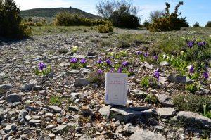 Causse du Larzac, roc du Mérigou - Ce qu'il advint du sauvage blanc de François Garde