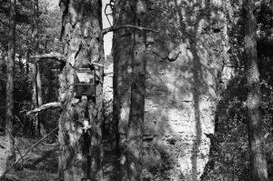 Causse noir, chemin du champignon préhistorique - Alberto Giacomelli