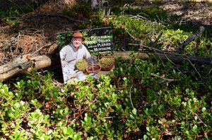 Causse noir, chemin du champignon préhistorique - Préparer de bonnes tisanes avec les plantes de montagne – Gilles Hiobergary