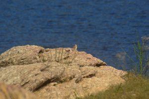 Monts de Lacaune, lac de Vezoles