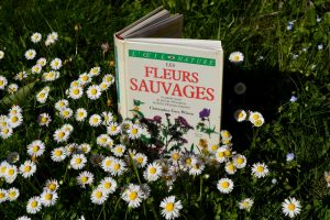 Fleurs sauvages - Gray Wilson