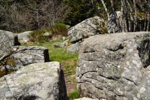 Forêt du Somail - Gravures rupestres