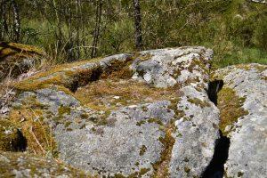 Forêt du Somail - Rec del Bosc
