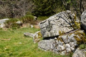Monts de Lacaune - Rec del Bosc