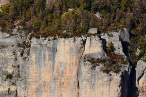 Gorges de la Jonte - Vautour fauve