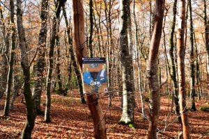 Causse du Larzac, forêt de La Vialette - Marlen Haushofer, Nous avons tué Stella