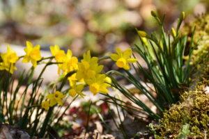 Dolmen de la Pinarède - Narcisse d'Asso