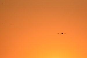 Vendres-plage - Au lever de soleil
