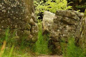 Forêt du Somail – Rec del Bosc