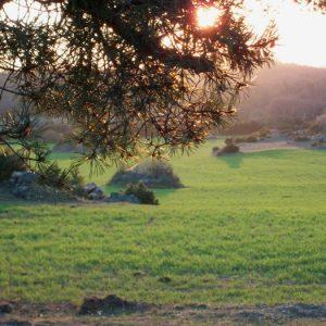 """jardin zen agricole"" ... Causse du Larzac (Couvertoirade)"