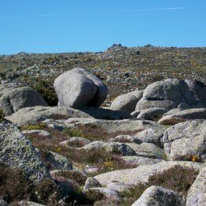 Rocs des Mulets (Mt Lozère)