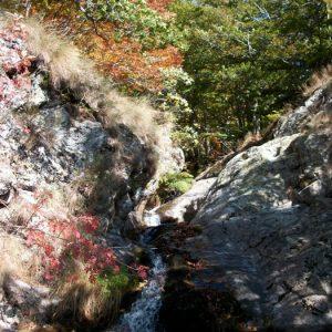 aux sources de l'Hérault, Mt Aigoual