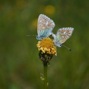 """les """"amours"""" du sablés-turquoise"""