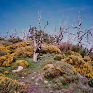 La Condamine - Col de l'Homme Mort, massif du mont Aigoual