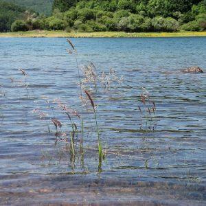 Lac du Laouzas, Haut-Languedoc - sur les berges est du lac, dans les monts de Lacaune