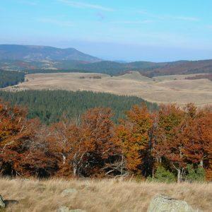 Le Lingas - Mt Aigoual