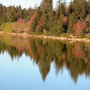 Le Lac des Pises, rive nord - Mt Aigoual