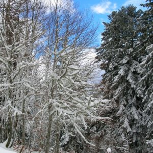 forêt enneigés - Bois de Soulan, Le Mourtis