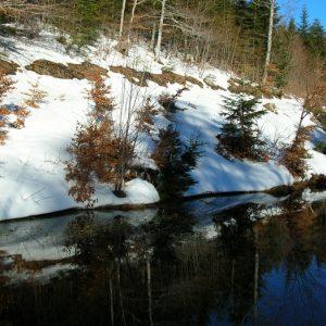 Reflets d'eau... Ruisseau au bois de Miquel, massif du mont Aigoual, en hiver