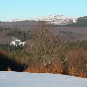 """Mt Aigoual, vu du """"Bois de Miquel"""""""