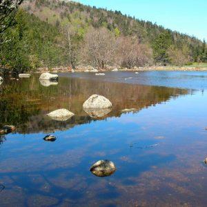 "reflets, ""La Mare"", le Lingas  - Mt Aigoual"