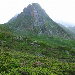 rhododendrons, le Pic de Pique (2 394 m) Vallée de la Frêche