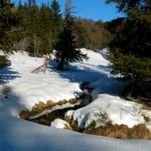 aux sources de la Dourbie - Ginestous (Massif de l'Aigoual)