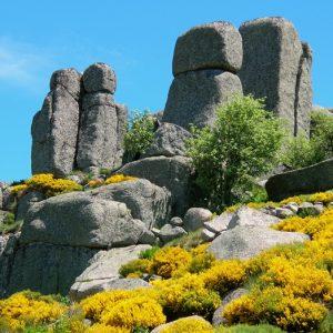 Les rocs de Montal dans les genêts au printemps