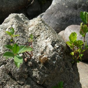 granit fécond ... Dourbie - Mt Aigoual