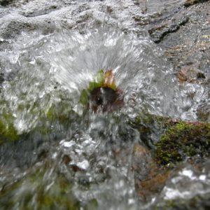 l'eau aux sources de l'Hérault, Mt Aigoual