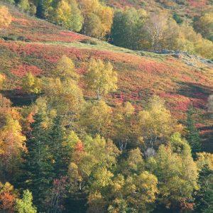 Hont Arrouye, flanc ouest du Pic de Bacanère - Luchonnais