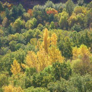 Bois, autour de Montjaux (Aveyron)