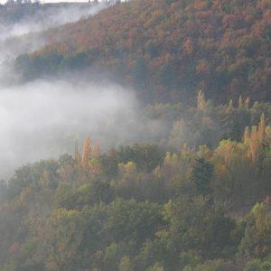 Brumes et bois, autour de Montjaux (Aveyron)