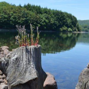 Lac du Laouzas (81), rive Est, devant l'île