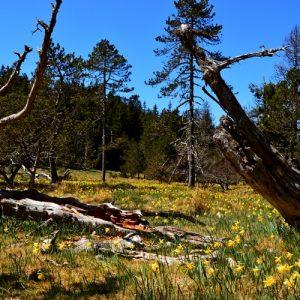 printemps aux sources de la Dourbie (Mt Aigoual)