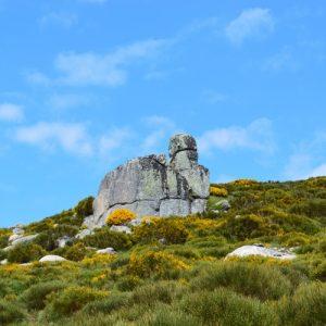 """""""vaisseau"""" de granit dans une mer de genêt (au dessus des """"Bouzèdes"""" massif du Lozère)"""
