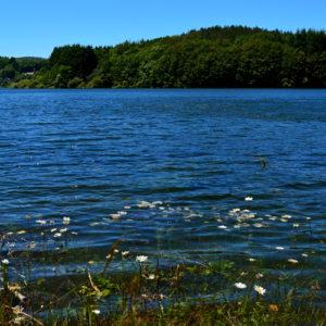 Lac du Laouzas (Tarn) au printemps ... beaucoup d'eau !