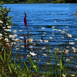 berge du Lac du Laouzas (Tarn - 81) au printemps ...