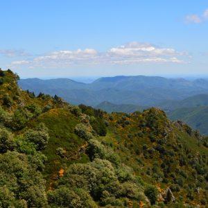 L'Arboretum de L'Hort de Dieu - versant sud du Mt Aigoual