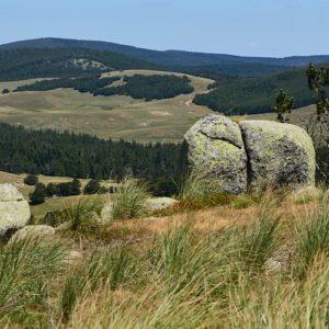 vue sur le Lingas (vers le col des Pises - Massif de l'Aigoual)