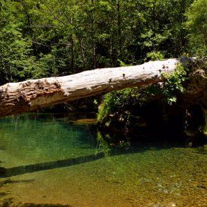 la Vis, un tronc en suspension après les crues d'hiver