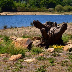 berges du Lac de Vezoles,  dans l'Hérault
