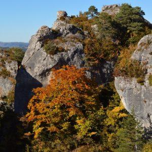 hêtre à Roquesaltes - Causse Noir, Aveyron