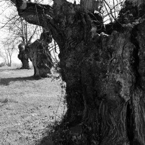 """troncs en perspectives - """"la Lézardière"""" - vers la chapelle St Etienne (Vialat-du-Tarn, Aveyron)"""