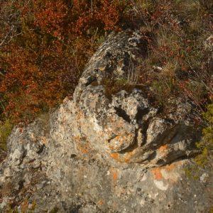 tête de phoque - Rocher vers Roquesaltes