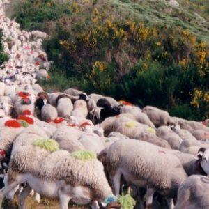 Au pied du Fageas -  Précédant le pont moutonnier